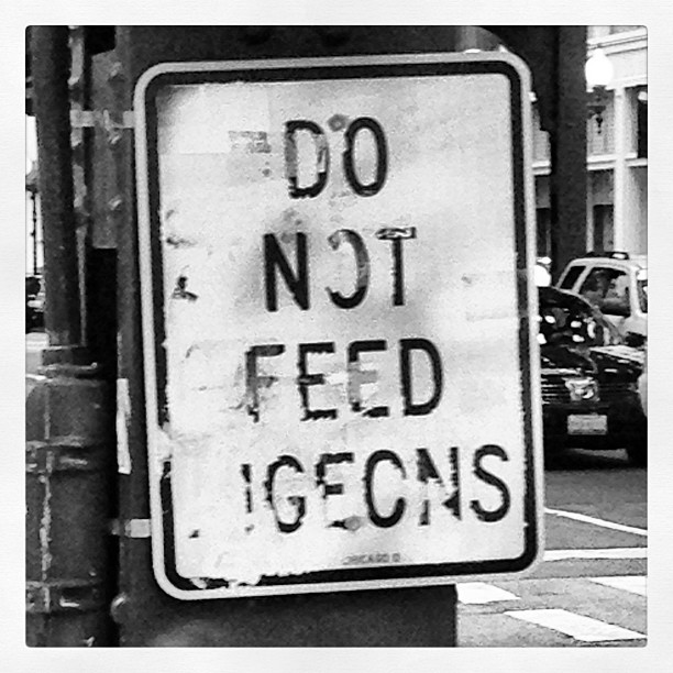 Do Not Feed Igeons
